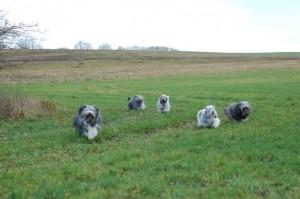 Unsere PONs toben über die Wiesen