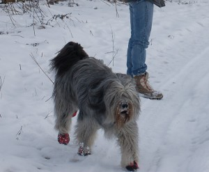 Budrys hat Spass im Schnee